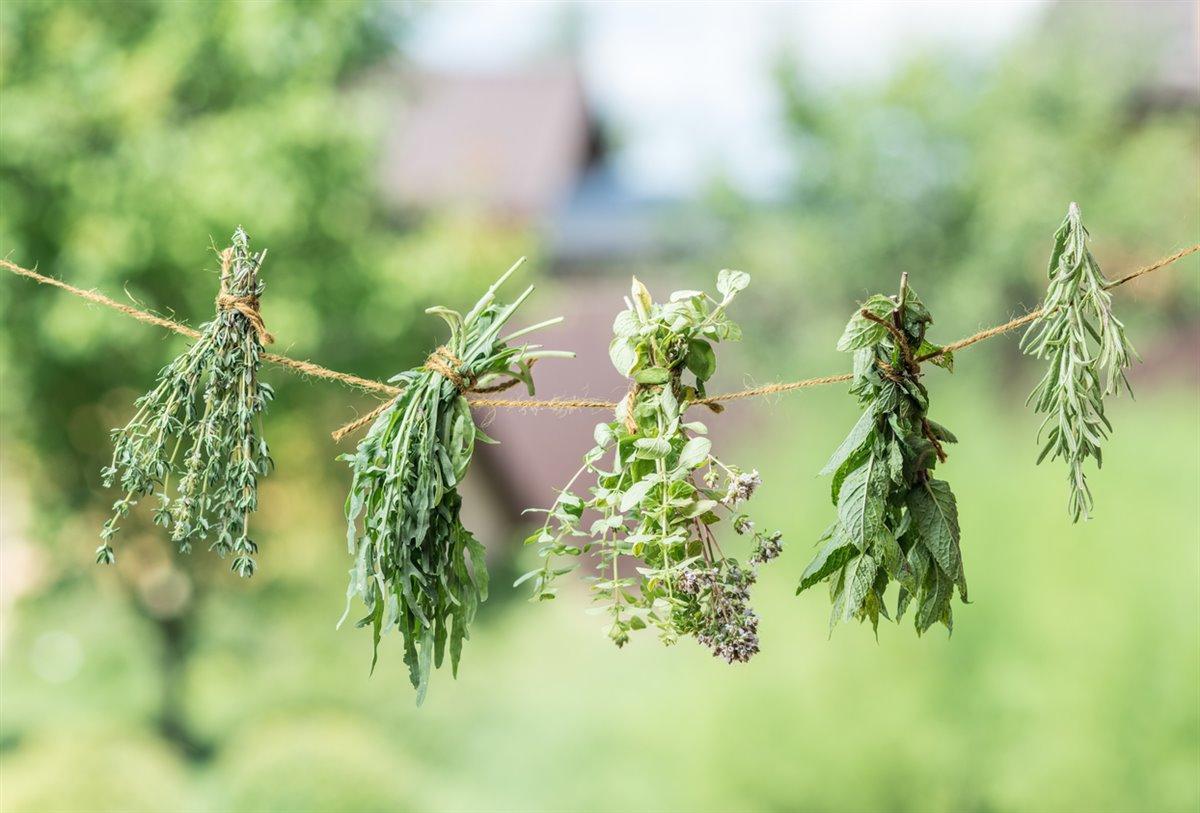 Hierbas aromáticas cómo secarlas